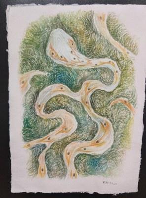 魏澤《手稿-森蚺》,2020,29.7*21cm,紙本水彩。