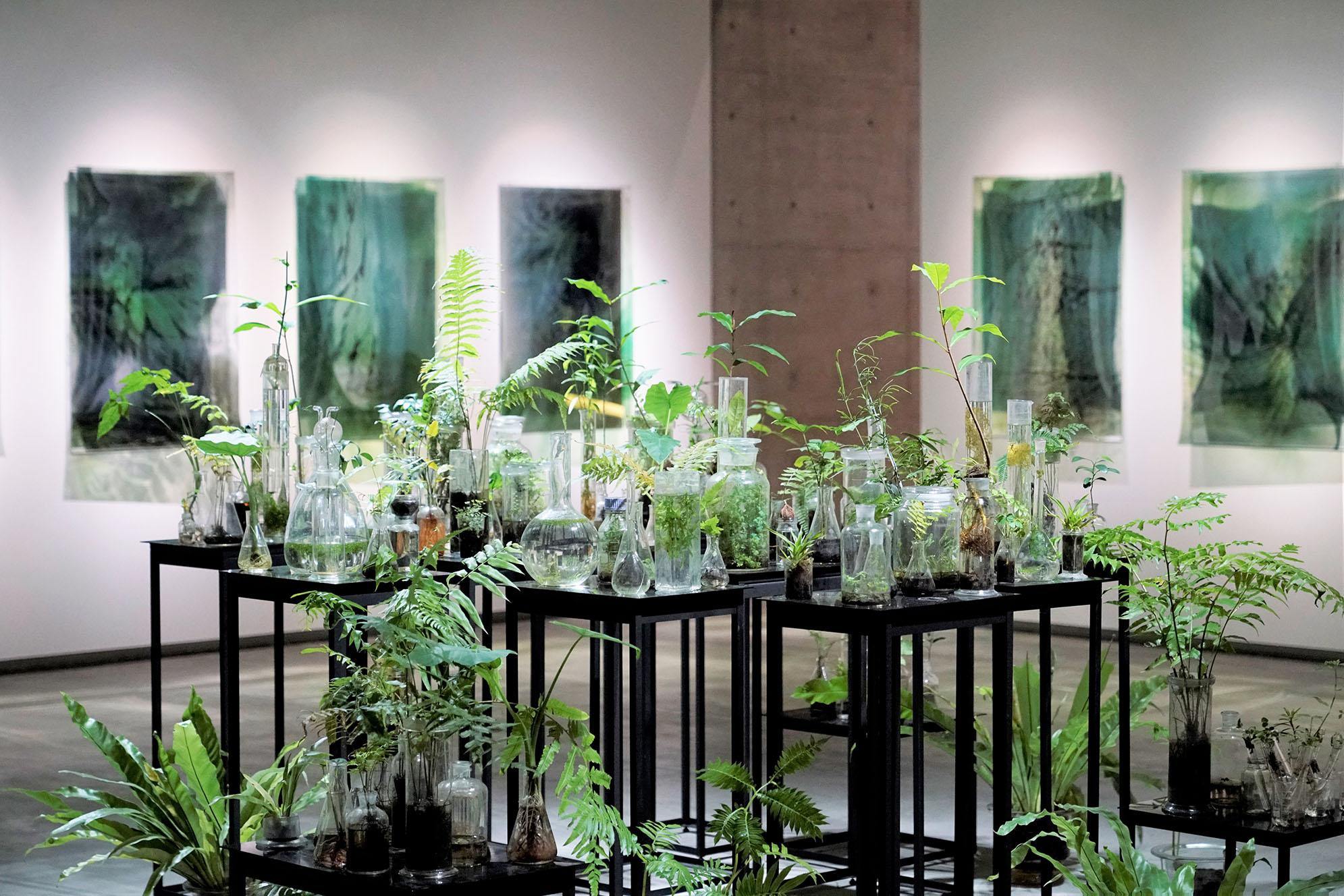 《通過綠色引信之力催生了花朵》及《與植物對話》